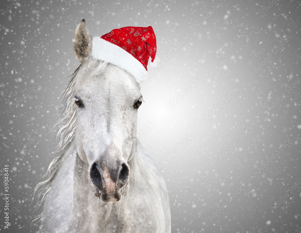 Fototapety, obrazy: White christmas horse with santa hat on gray background snowfall