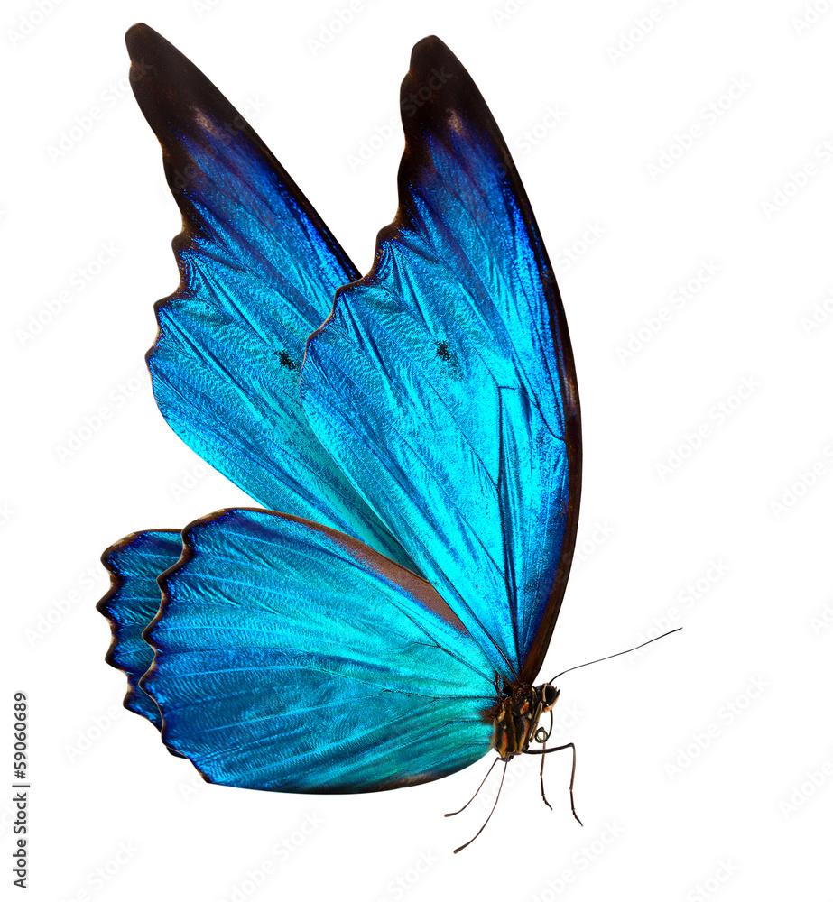 Fototapeta butterfly macro background