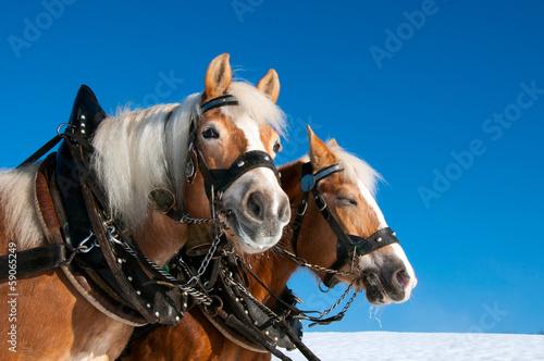 Valokuva Pferdegespann