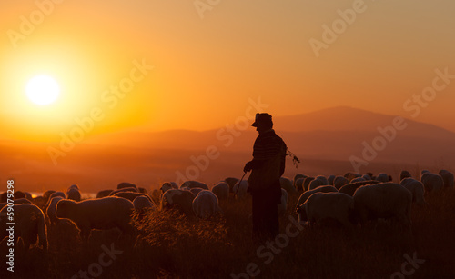 Photo sur Aluminium Sheep Shepherd
