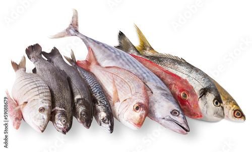 Vászonkép pescato mediterraneo in fondo bianco
