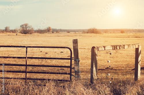 Photo  Pasture