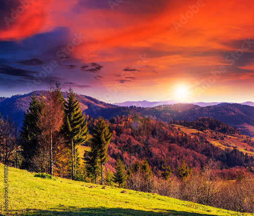 Fototapety, obrazy: coniferous forest on a mountain slope