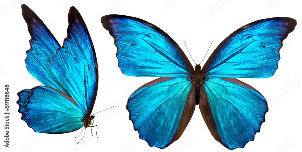 piękny motyl na białym tle