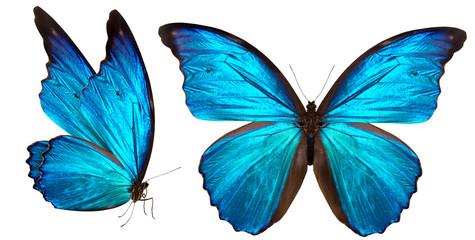 Fototapeta beautiful butterfly isolated on white