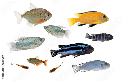 Set Of Different Aquarium Fishes Isolated On White Buy This Stock