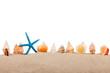 Isolated marine star and seashell