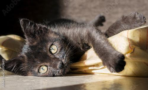 Obraz na płótnie gattino al sole su cuscino giallo