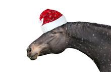 Black Horse With  Christmas Ha...