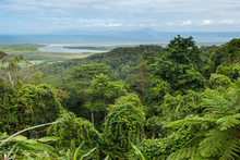 Daintree National Park, Cape T...