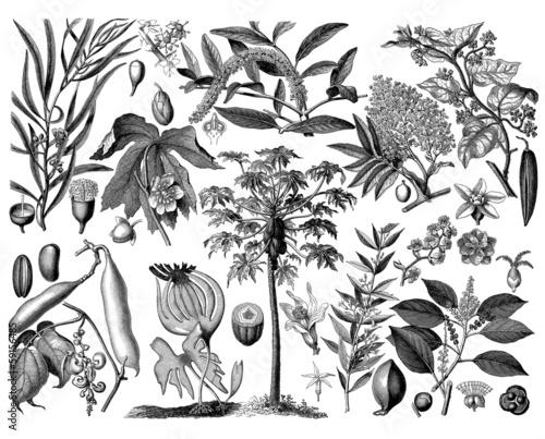 Foto  Plants - Botany