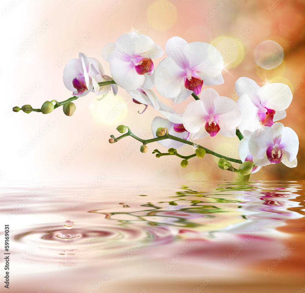 Fototapeta white orchids on water with drop