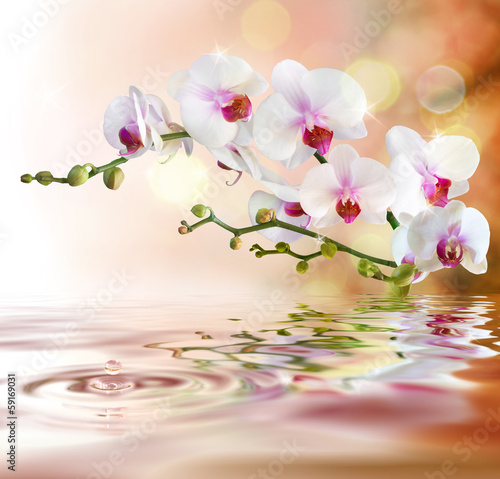 Fototapety, obrazy: white orchids on water with drop