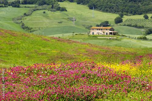 Fotografie, Obraz  Tuscany - landscape with spring flowers