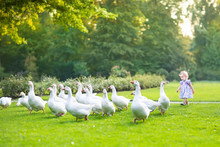 Funny Baby Girl Chasing Wild Geese In A Park In A Autumn Park