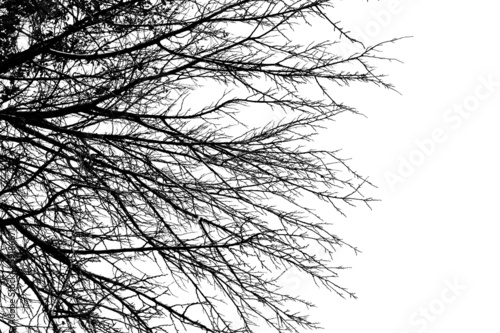 galaz-drzewa-na-bialym-tle