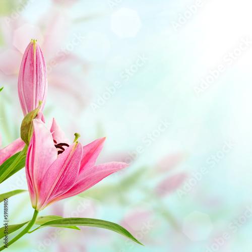 rozowe-tlo-lilie