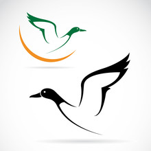 Vector Of A Flying Wild Duck I...