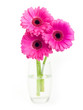 Pink gerbera flower isolated on white background