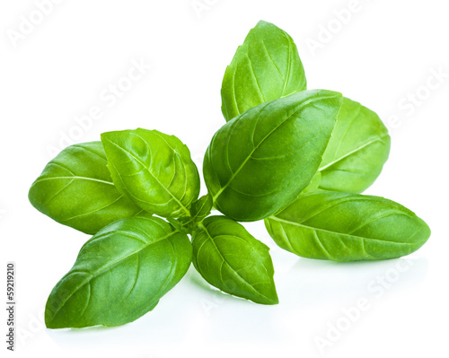 Stampa su Tela basil leaves isolated