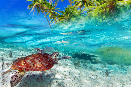 Papiers peints Recifs coralliens Green turtle swimming at tropical island of Caribbean Sea