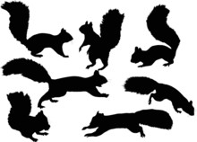Seven Squirrels On White Background