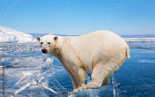 Staande foto Ijsbeer polar bear standing on the ice block