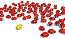 Yellow Ladybird Is Marginalized