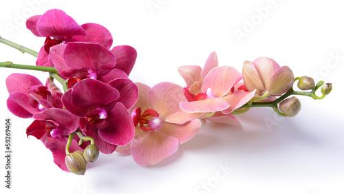 piekna-kwitnaca-orchidea-odizolowywajaca-na-bielu