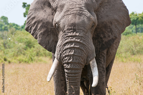 Poster Olifant closeup of an elephant head
