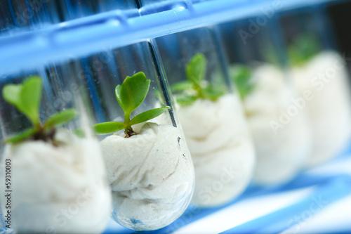 Fotografía  Plant biotechnology