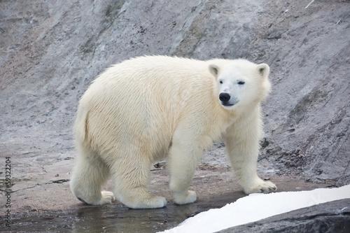 Papiers peints Ours Blanc Polar bear