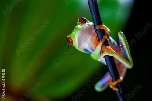 Natural concept with beautiful frog in the jungle