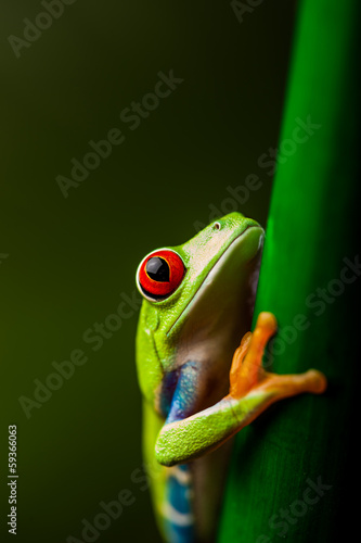 Photo Rain forest tropical theme with colorful frog