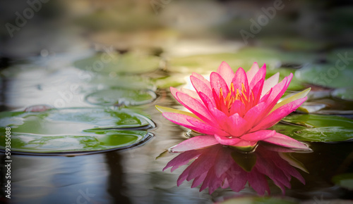 In de dag Waterlelies Pink lotus
