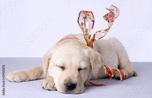 Photo  Puppy dog farmer of retriever