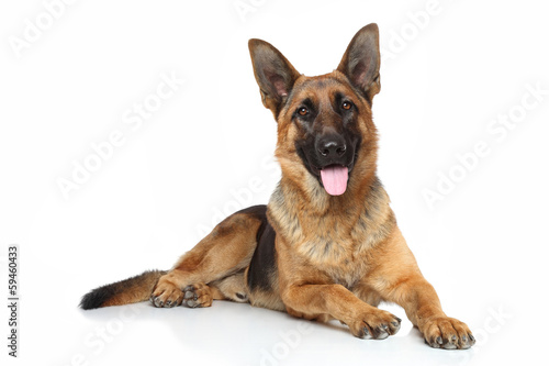 Fotografía German shepherd