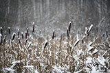 Winter twigs and grass covered with frost and snow
