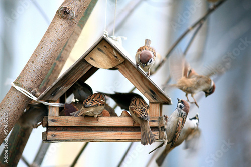 Foto op Canvas Vogel Bird Feeders