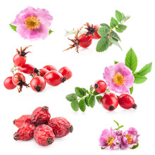 Rose Hips (Rosa Canina) Flower...