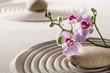 pure wellness with zen orchids