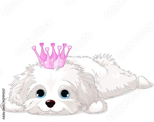 Fotografiet Havanese Puppy with crown