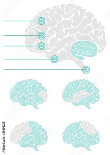 Fotografie, Obraz  mózg widok z boku schemat elementy infograficzne