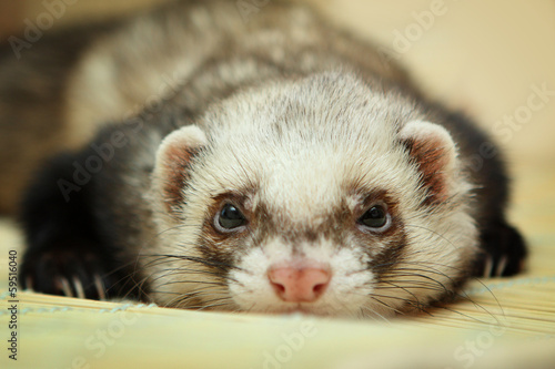 Fotografering  Funny ferret on bamboo mat