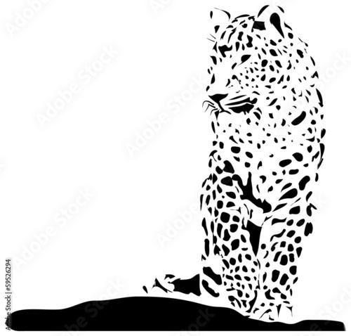 Photo  Isolated black leopard on white background - vector illustration