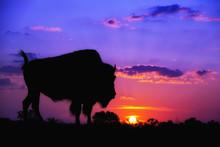 American Bison Silhouette Agai...