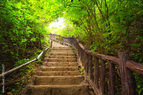 Stairway to forest, Kanchanburi,Thailand Wallpaper Mural