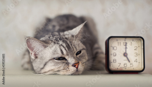 cat with clock Wallpaper Mural