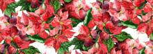 Poinsettias Seamless Pattern