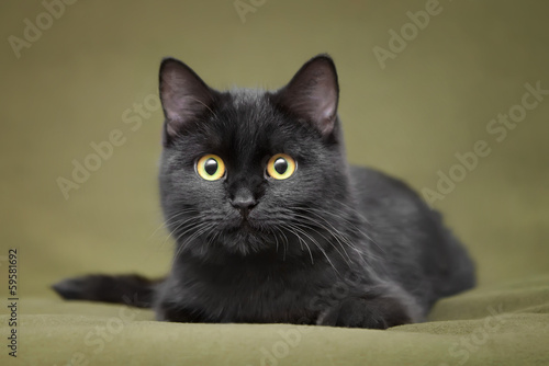 Foto op Plexiglas Panter Beautiful black cat with yellow eyes lying on blanket